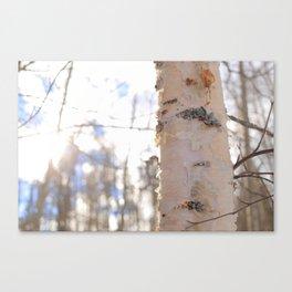 Son of a Birch 1 Canvas Print
