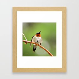 Hummingbird XVII Framed Art Print
