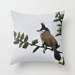 Red-Whiskered Bulbul Throw Pillow