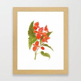 Begonia Framed Art Print