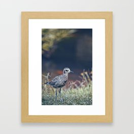 Kaneohe Bird Framed Art Print