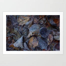 Frost & Leaves2 Art Print