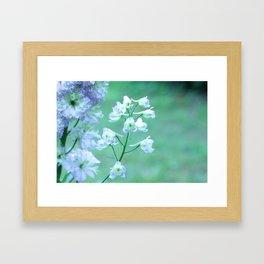 Delphiniums in Bloom Framed Art Print