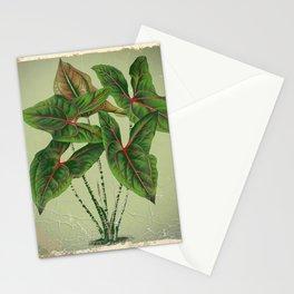 Grungy antique style  Botanical Art Stationery Cards