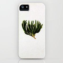 Botanical Moss iPhone Case