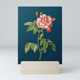 Vintage French Rosebush with Variegated Flowers Botanical Illustration on Teal Mini Art Print