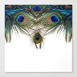 BLUE-GREEN PEACOCK FEATHERS WHITE ART Canvas Print
