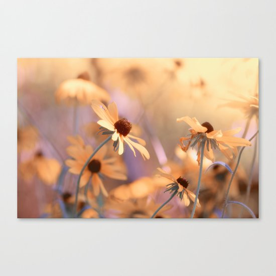 Suns star in the autumn garden Canvas Print