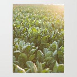 Nature photography, Italy sunset, italian photo, Puglia fine art, Sicilia, Poster