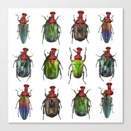 Beetles on the wall Canvas Print