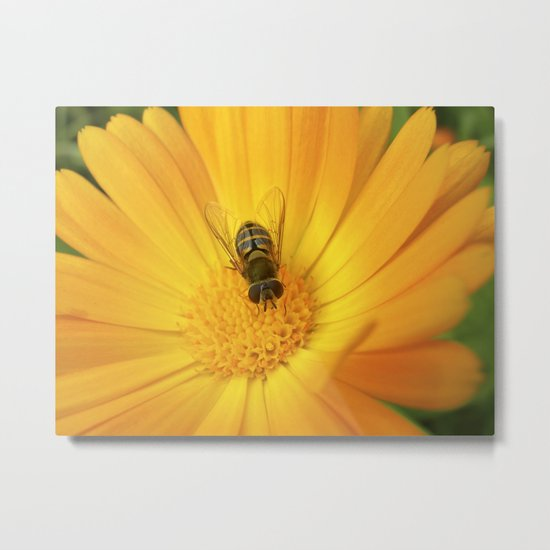 flower fly macro II Metal Print