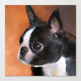 Perky Boston Terrier Canvas Print