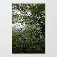 Before the Rain Canvas Print