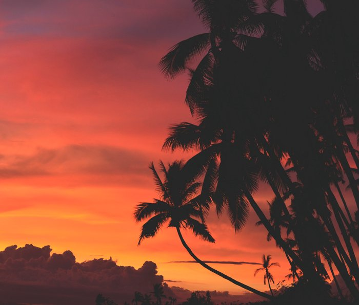 Hawaii Palm Trees Sunset Metal Travel Mug