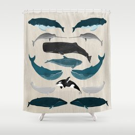 Whales - Pod of Whales Print by Andrea Lauren Shower Curtain