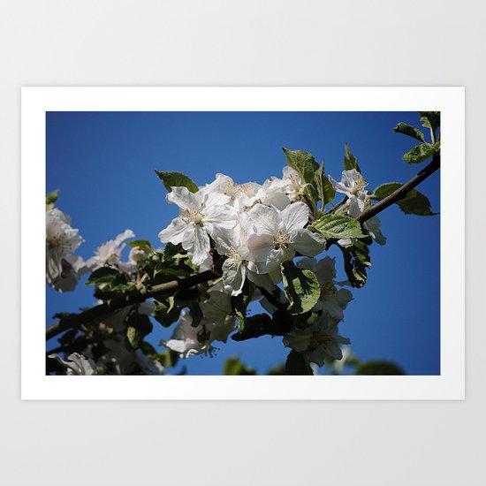 Frühlingboten  Art Print