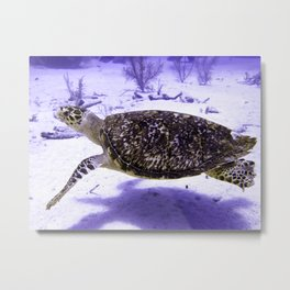 Swimming Hawksbill Turtle Metal Print