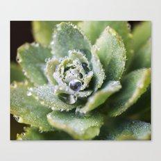 Dew Drop Petals Canvas Print