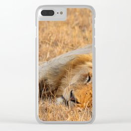 On Safari - Sleeping Lion Clear iPhone Case
