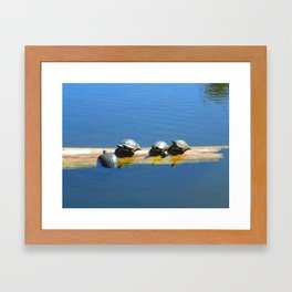 These Little Turtles  Framed Art Print