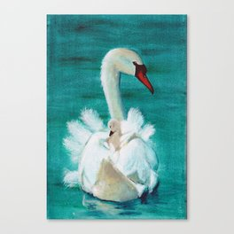 Swan mother Canvas Print