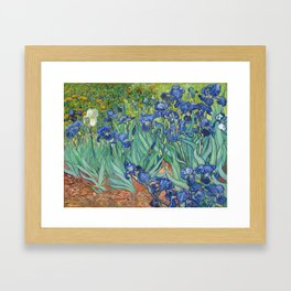 Irises - Vincent Van Gogh Framed Art Print