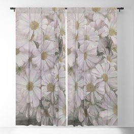pink daisy in bloom in spring Blackout Curtain