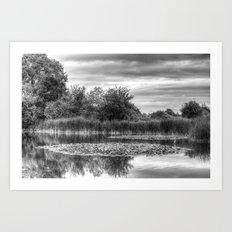 The Lily Pond Art Print