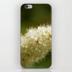 small world iPhone & iPod Skin