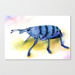 Eupholus Weevil Canvas Print