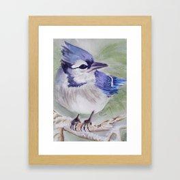 BEAUTIFUL BLUE BIRD Framed Art Print