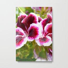 Hibiscus in Maui Metal Print