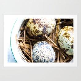 Fresh Quail Eggs Art Print