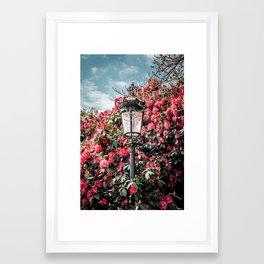 Roya flowers Framed Art Print