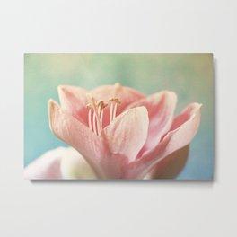 Sweet soft rose amarillys Metal Print
