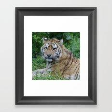 A watching tiger Framed Art Print