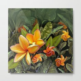 Hawaiian Plumeria at First Light Metal Print