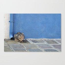 Grey Cat Blue Wall Canvas Print