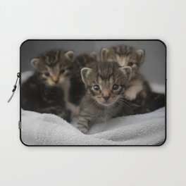 Photo of a group of cuddly kittens Laptop Sleeve