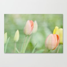 Peach and Yellow Spring Tulip Flowers Canvas Print
