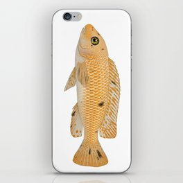 Malawi cichlids Labeotropheus trewavasae female iPhone Skin