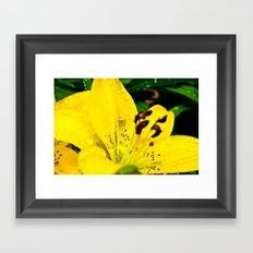 Spider in Flower After Rain Framed Art Print