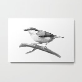 Illustration of a Nuthatch. Digital painting. Metal Print