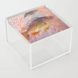 Love is a Fish Acrylic Box