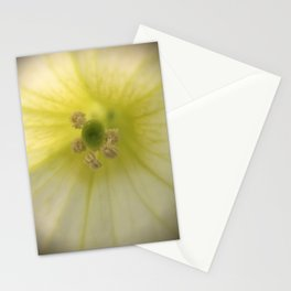 Center of a White Petunia Stationery Cards