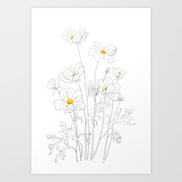 white cosmos flowers  ink and watercolor Art Print