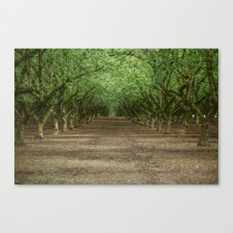 Tree Orchard Canvas Print