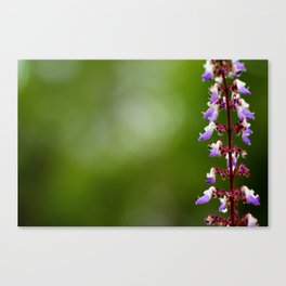 Every flower is a soul blossoming in nature. Canvas Print