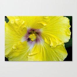 Yellow Hibiscus 17 5799 Canvas Print