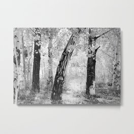 Aspens in Black & White Metal Print
